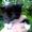Предлагаю котят от сиамской кошки #1456370