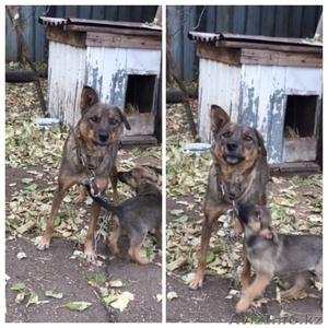 Взрослые собаки  ! - Изображение #2, Объявление #1543927