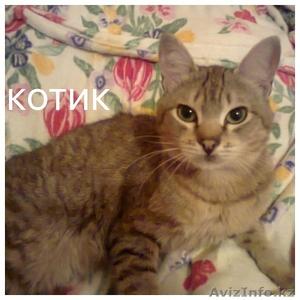 Взрослые коты в надежные руки ! - Изображение #4, Объявление #1563233