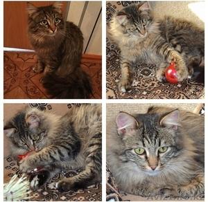 Взрослые коты в надежные руки ! - Изображение #5, Объявление #1563233