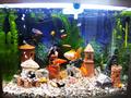 Красивый аквариум Hopar H620