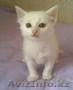 Подарки от Благотворительного Фонда Защиты Животных - Изображение #4, Объявление #936764