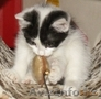 Подарки от Благотворительного Фонда Защиты Животных - Изображение #7, Объявление #936764