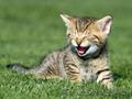 Подарки от Благотворительного Фонда Защиты Животных - Изображение #5, Объявление #936764