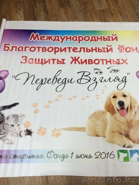Подарки от Международного Благотворительного Фонда Защиты Животных, Объявление #1448425